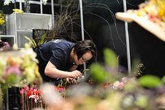 WSC2015_Skill28_FG_8201 (WorldSkills) Tags: finland sopaulo floristry wsc competitor worldskills wsc2015 skill28 josefiinakivero