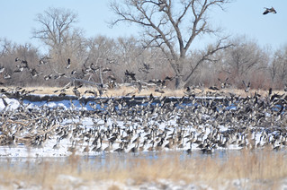 Nebraska Waterfowl Hunting 11