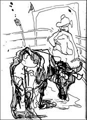 Dark Bull (Kerry Niemann) Tags: bullriding apachejunction penandinkdrawing