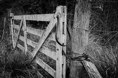 Open and Close (facundoroca) Tags: white black blanco chains puerta madera nikon open close negro pasto villa cordoba abierto tranquera cerrado cierre berna cadena porton cerrojo d5100