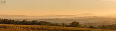 Between Valleys And Layers (Daniele Pauletto) Tags: autumn light sunset panorama landscape vineyard warm tramonto wine hills chianti siena luce vino vigneto borgosanfelice dpphotography