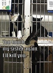 You touch my sister (KLMP) Tags: dog cat meme godfather