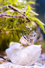 Meeresaquarium Nautiland in Sonneberg 2015 (AndiCologne) Tags: fish germany deutschland aquarium snake fisch lizard python chameleon moraine schlange echse stonefish fische chamleon reptilien sonneberg steinfisch exotarium morne nautiland