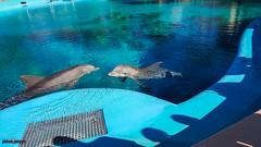 jcpublished-20.jpg (jadedcandy7) Tags: dolphin secretgarden wedding lasvegas honeymoon vegas