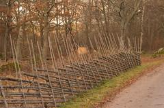 Don't fence me in (Yvonne L Sweden) Tags: sweden staket november roadtrip hjälmaredocka gärdesgård gärsgård fence 3662016