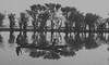 Boatman (Rafio Islam) Tags: boat boatman river riverbank riverine haor swamp blackwhite tree travel oar lake bangladesh water
