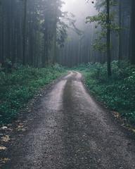 Forest Path (cichydan) Tags: landscape outdoor nature tree mist green wood fog foggy silent nobody path poland nikon