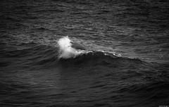 Black Wave (JoanZoniga) Tags: jczuniga wave shorebreak ocean puravida playahermosa surfing surfphotography costarica