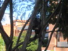 Monos (Wguayana) Tags: venezuela bolívar guayana puerto ordaz city urban latin tropical mono monkey primate animal nature unviersidad university ucab caroní