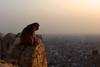 Contemplative Monkey (fzlxk) Tags: india jaipur rajasthan monkey sunset comtemplative overlooking reflective fort nahargarh animal inde travel voyage asia asie travelphotography photographiedevoyage