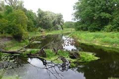 То и дело с вессенним разливом деревья падают в реку. Последний взгляд на эту реку и невероятная грусть внутри от прощания с ней.