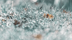 Millions Bokehs (PokemonaDeChroma) Tags: bokeh leaves leaf grass dew light garden tenderness canon6d sigma150mm 169 white turquoise brown water hbw pastel soft