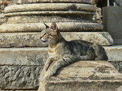 """Turkia 2008 (gato en Éfeso) • <a style=""""font-size:0.8em;"""" href=""""http://www.flickr.com/photos/15452905@N02/31878959520/"""" target=""""_blank"""">View on Flickr</a>"""