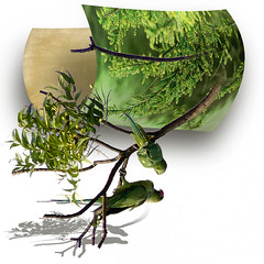 Two parrots (jaci XIII) Tags: planta pássaro papagaio oob parrot bird plant