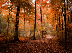 Orange (patkelley3) Tags: forest rays sun orange fall autumn path