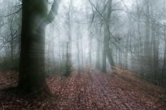 Drawn into the woods (SimonLea2012) Tags: season winter atmospheric atmosphere ghostly haunted abitdifferent trees woodland woods mist variablezoom zoomzoom longexposure