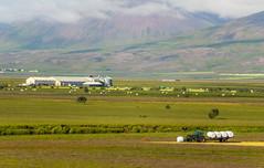 Farming in Varmahlíð in Skagafjörður, North of Iceland (thorrisig) Tags: 06072016 sveitabær traktor varmahlíð heyrúllur sveit iceland ísland island thorrisig thorfinnursigurgeirsson thorri þorrisig thorfinnur þorfinnur þorri þorfinnursigurgeirsson sigurgeirsson sigurgeirssonþorfinnur nature náttúra norðurland northoficeland north farm skagafjörður skagafjordur skagafjord vastness openspace