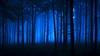 Blue (jasontheaker) Tags: blue fedup depression pain woods forest mist fog lost pine fewston yorkshire otley