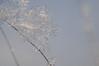 Snow crystal (grus_p) Tags: snowcrystal winter january macro nature beautyofnature winterdetail luminanceboréale finland nikon