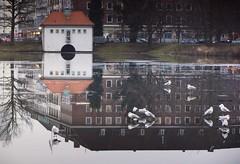 Möwen auf dem Eis (wolfi-rabe) Tags: spiegelung spiegelbild möwen eis