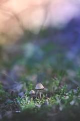Seul face à la lumière #2 (Johan FREIMANN) Tags: champignon bois foret proxy macro france nikon sigma d7000 pdc hautesavoie printemps bokeh lumière doux mushroom