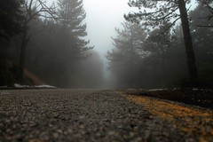 In the mist. (philos from Athens) Tags: parnitha mist forest picmonkey