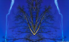 zigZag (Zzzzt!Zzzzt!) Tags: zigzag mirrored kalaido sky trees contrail