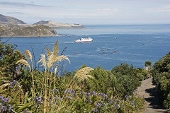 Heading south (Karen Pincott) Tags: wellington cookstrait pencarrowlighthouse theheads summer capitalcity calm sea water ferry interislander bush toitoi agapanthus newzealand