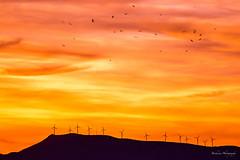 Le printemps marocain. (Bouhsina Photography) Tags: printemps maroc tétouan tetuan bouhsina bouhsinaphotography canon 5diii ef70200 ciel coucher oiseaux nuages orange montagne palmes éoliennes vent soleil nature silhouette ombre brillant