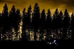 _MG_8835 (Sakuto) Tags: trees light wallpaper nature night clouds forest stars landscape nightsky shape myst lightpollution