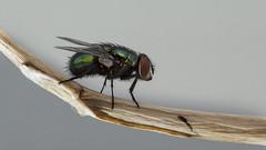 Fly-Sinek-2015 - #m43turkiye.com (Ciddi Biri) Tags: animal trash insect fly shit bok makro bcek sinek p vivitar55mmf28macro olympusomdem10 m43turkiyecom