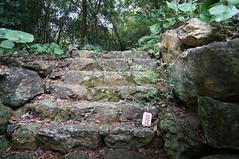 201508291_高知_牧野植物園