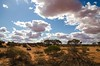 Wild Horse (Guille Barbat) Tags: nature desert 4x4 4wd panoramic toyota southaustralia asutralia ladscapes roxbydowns guillebarbat