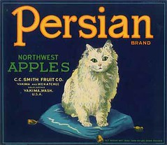 "Persian Cat • <a style=""font-size:0.8em;"" href=""http://www.flickr.com/photos/136320455@N08/21480323361/"" target=""_blank"">View on Flickr</a>"
