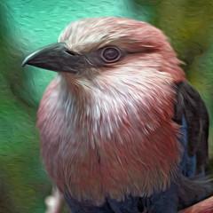 285  365  IV {explore} (Randomographer) Tags: blue portrait bird photoshop painting zoo beak feather denver explore oil roller 365 effect bellied 285 plumage coracias project365 cyanogaster