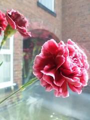 FB_IMG_1445158615977 (Nicolaspeakssometimes) Tags: flower