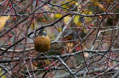 the Bird in the Bush (GSankary) Tags: fall farm farms ruralscenes farmscenes