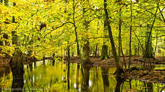 Yellow  Autumn (Alex Verweij) Tags: