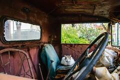 Old Rusty's new inhabitant (George Fournaris) Tags: cat rust σκουριά ruby10 σκουριασμένοσγερανόσ