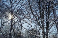 Sunny Autumn Day After Snowfall (smfmi) Tags: trees pentax michigan ks2 snowybranches pentaxlife justpentax frohm ks2snow