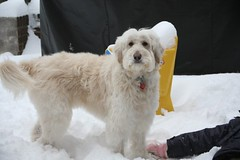 loving-the-snow--molly-is-one-of-cece-and-tobys-girls--shes-so-beautiful-_4225304011_o