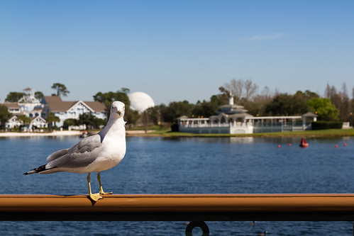 Bird's @ Disney's Yacht Club Resort