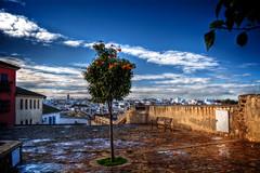 Marchena - Sevilla (mgarciac1965) Tags: marchena pueblo arbol naranjo sevilla seville andalucía andalucia andalusia españa spain cielo sky azul blue textura empedrado plaza ngc