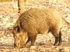 Spain Ibex Hunt & Driven Partridge Hunts 57