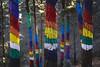 When we were giants, part 5: Sacred mountains (ponzoñosa) Tags: oma bosque woods pintado colorful ibarrola euskadi urdaibai perspective prespectiva arte landart efímero pais vasco