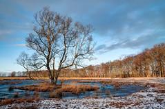No title (frata60) Tags: nikon d300s 1685mm nikkor afs landscape landschap netherlands nederland nature natuur nederlandvandaag tree boom winter ice sky noordnederland bunne lieveren