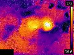 Thermal image of Dog Bone Geyser (8 June 2016) (James St. John) Tags: dog bone geyser sawmill group upper basin yellowstone wyoming hot spring springs thermal image temperature