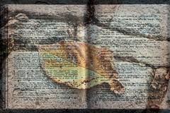 The Book of Dream Interpretations (Blues Views) Tags: book dream interpretations greek greeklanguage greektext layers leaf writing layeredimage double scannedimage epson olympuspenep3 olympus sigma sigma19mmf28artlens gimplayers textures layeredscanandphotograph