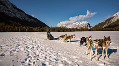 off we go (Tony_Brasier) Tags: dogs nikond7200 show cold mountains fun tonybrasier 16mm85mm trees sledge huskies women dogsledge skiresort frozenlake bluesky canmore canada alberta selfportrait