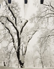 Ansel Adams (Peer Into The Past) Tags: 1938 peerintothepast icicles snow blackandwhitephotography history anseladams